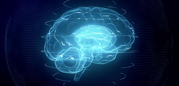 Computer image of human brain in Cognitive Science of Language program